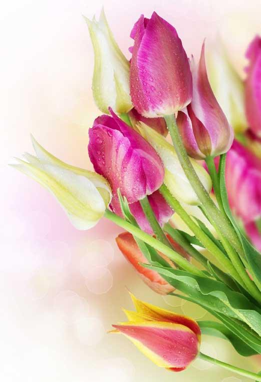 about-boston-online-florist